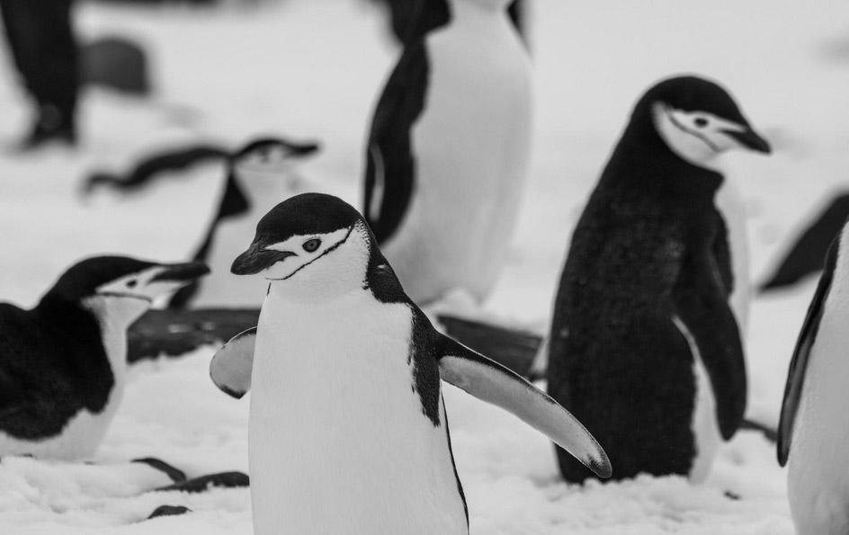 antartique insolite